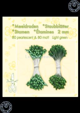 Image de Étamines ± 80 matt & 80 light green
