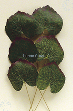 "Image de LeCreaDesign® Paquets de feuilles ""bégonia"""